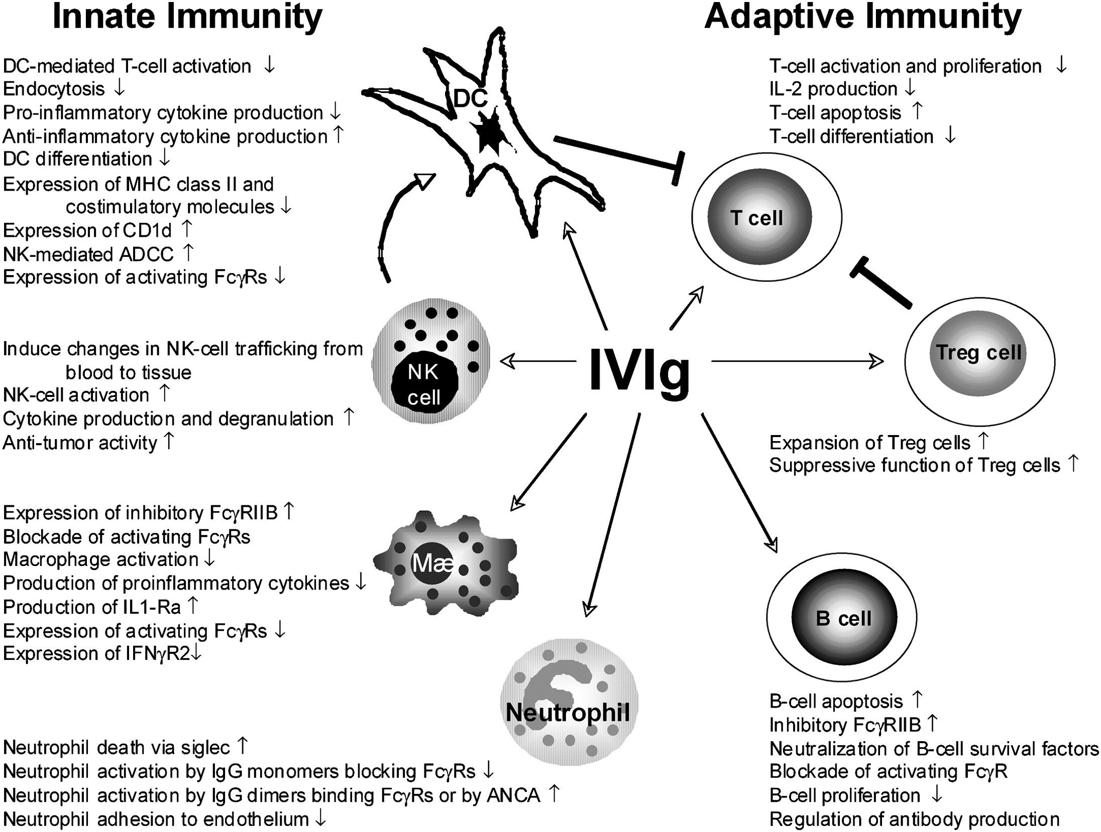 Therapeutic Use of Immunoglobulins - Advances in Pediatrics